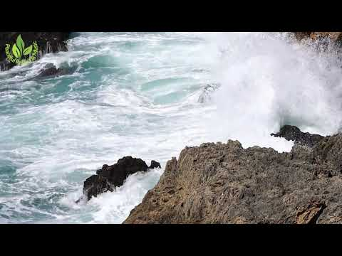 Sounds Of Caribbean Sea. 1 Hour of Sea Waves for Relaxation, Meditation and Sleep