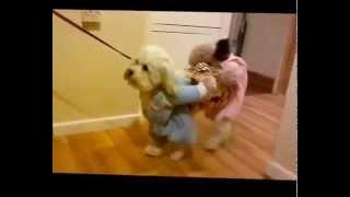 FASHION PETS-смешные животные в костюмах( одетые животные подборка) new!2015