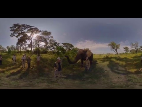 360 4K Video Elephant walk, Oculus Rift VR - Photos of Africa