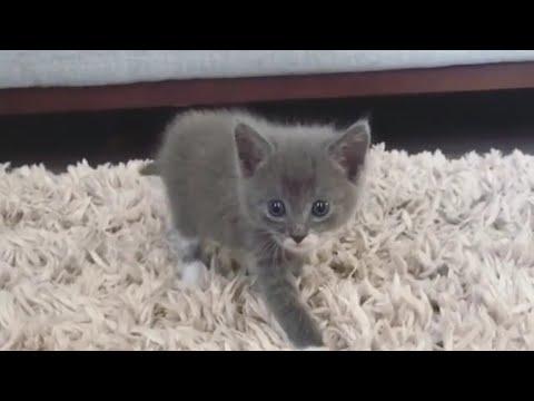 Cats Kittens Super Cute Playing Moment Video #CatsKittens 35