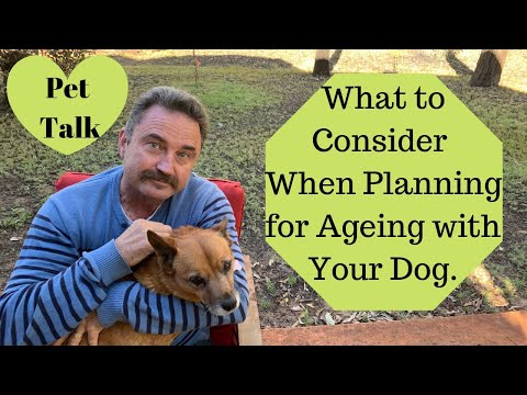 What to consider when planning for Ageing with your Dog.