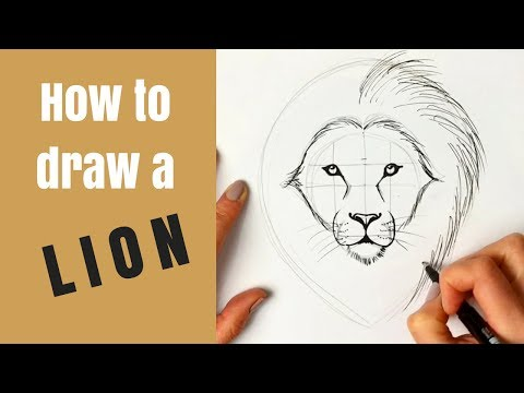 beginners---how-to-draw-a-lion
