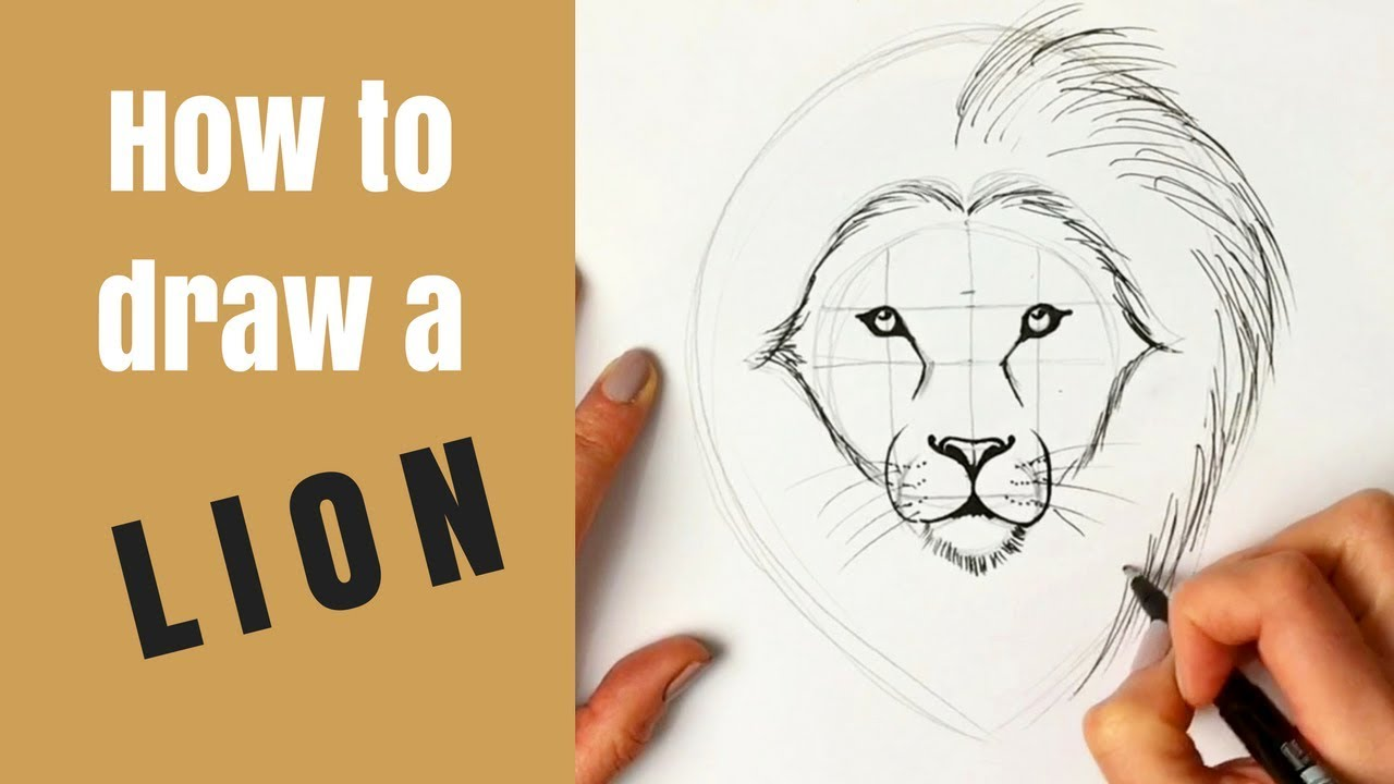 Beginners How To Draw A Lion Youtube