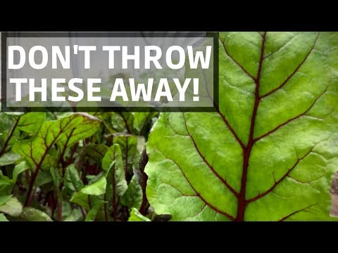 The SUPERFOOD That Most People Throw Away
