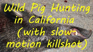Wild Pig Hunting in California (with slow motion killshot)