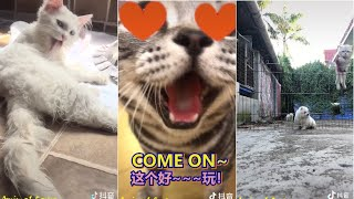 Tiktok Funny Animal / Douyin Cute And Funny Pets Compilation 2019 #39