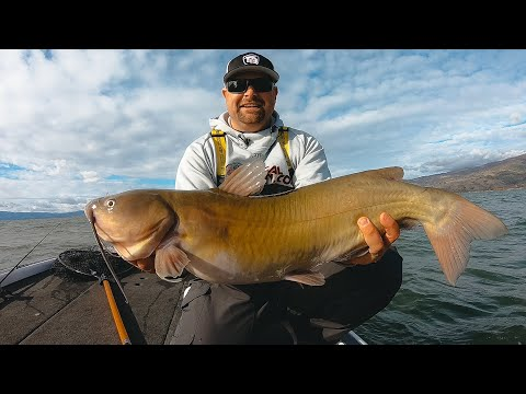 fishing-brutal-post-front-winter-conditions-for-bass-and-catfish