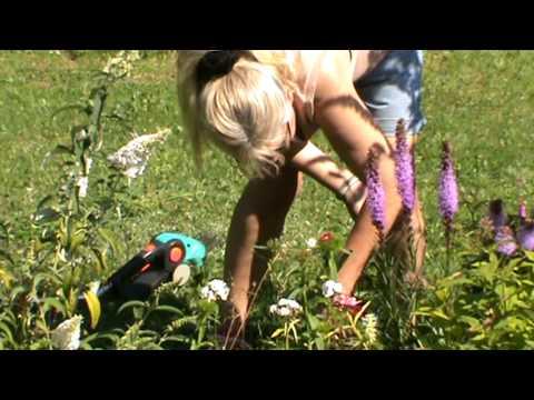 Nackte Frauen Bei Der Gartenarbeit
