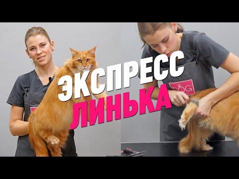 Груминг кошек видеоурок