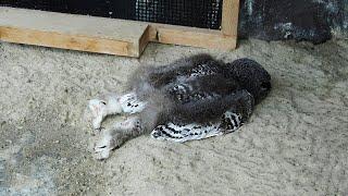 Why Do Owls Sleep Like That? You've Never Seen the Way Animals Sleep