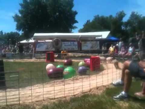 Benton county fair pig races