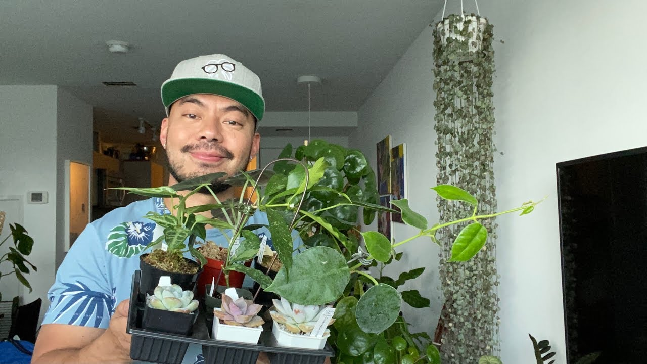 Download *Live Stream* Last Houseplant Haul | Growing My Indoor Plant Collection