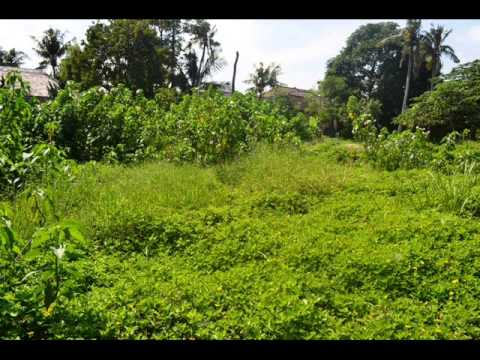 Land for sale in Bali, outstanding view in canggu brawa Bali -- TJCG108