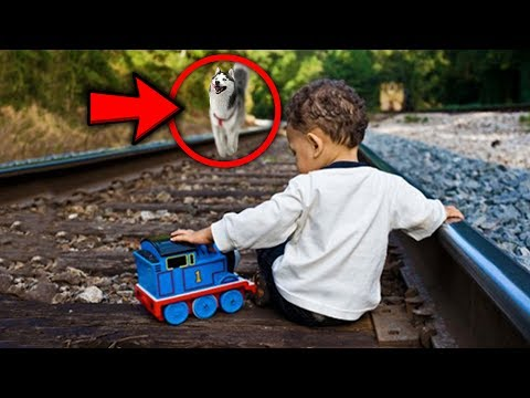 Top 5 PETS WHO SAVED THEIR OWNERS LIVES!