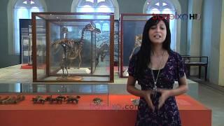 Xplore Mauritius Dodo Museum