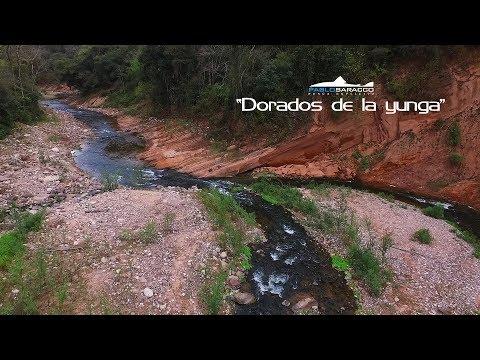 Rio Dorado. Golden dorado fishing in Argentina.