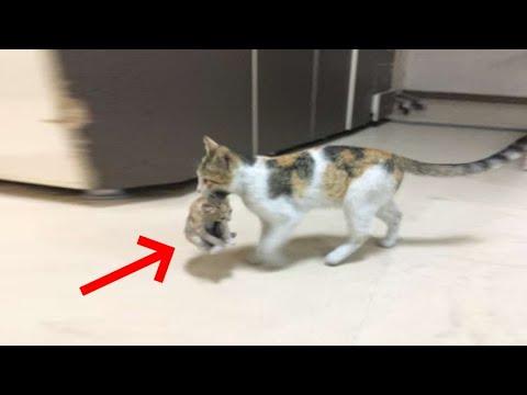 Кошка держа зубах котёнка за 11 мая