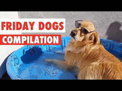 Friday Dogs Video Compilation 2016