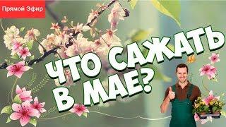 Хитсад ТВ - Что посадить в мае? ❀ Советы садоводам ✿