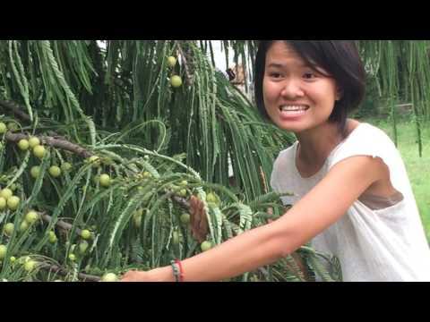 Visiting an organic farm in India