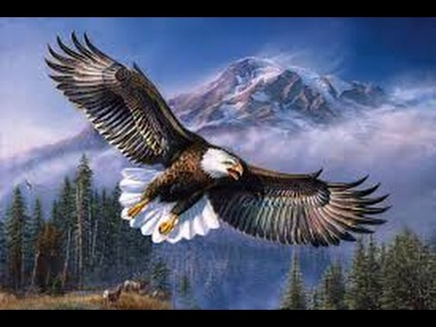 Wildlife Documentary 2015 -  American Eagle   Animal Planet