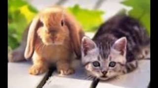 фото кролики