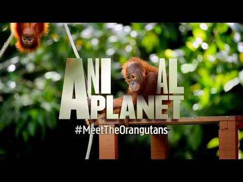 Welcome to the official Animal Planet UK channel!