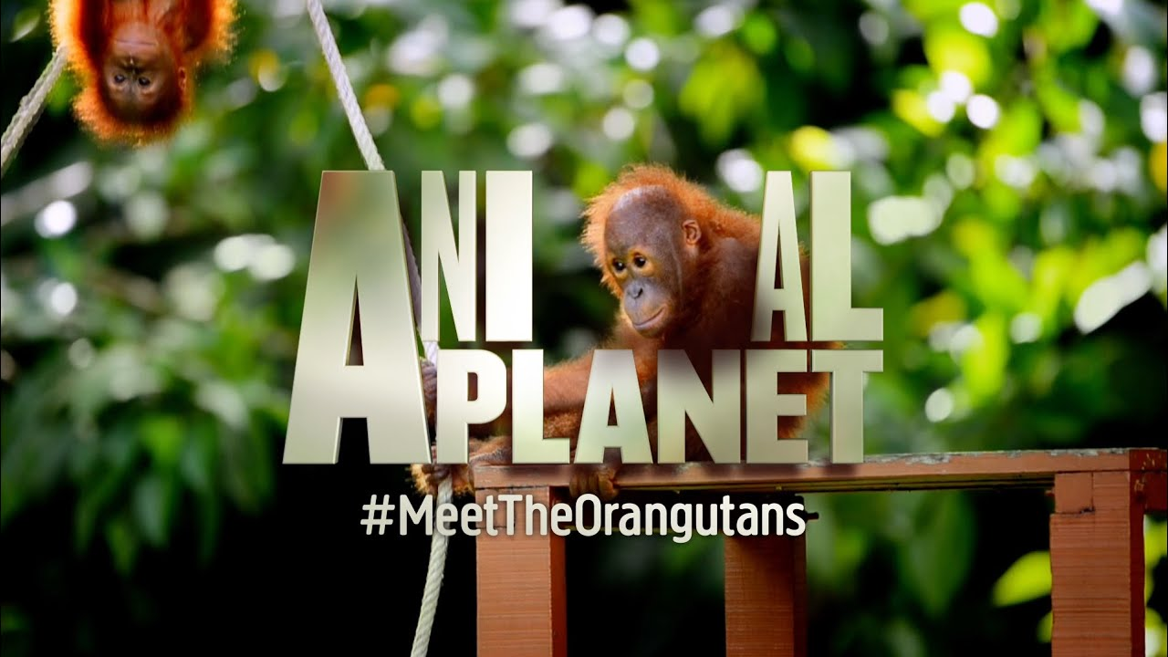 Welcome to the official Animal Planet UK channel! - YouTube