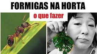 Como Acabar Com Formigas Na Horta, Pomar E Jardim