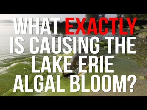 What EXACTLY Is Causing The Lake Erie Algal Bloom?