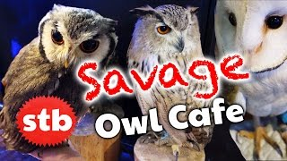 Owl Cafe in Akihabara, Tokyo, Japan // Animal Cafe with SoloTravelBlog