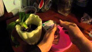 Витаминный коктейль для орхидей. Как восстановить тургор у листьев орхидеи. №1(, 2015-02-21T18:52:45.000Z)
