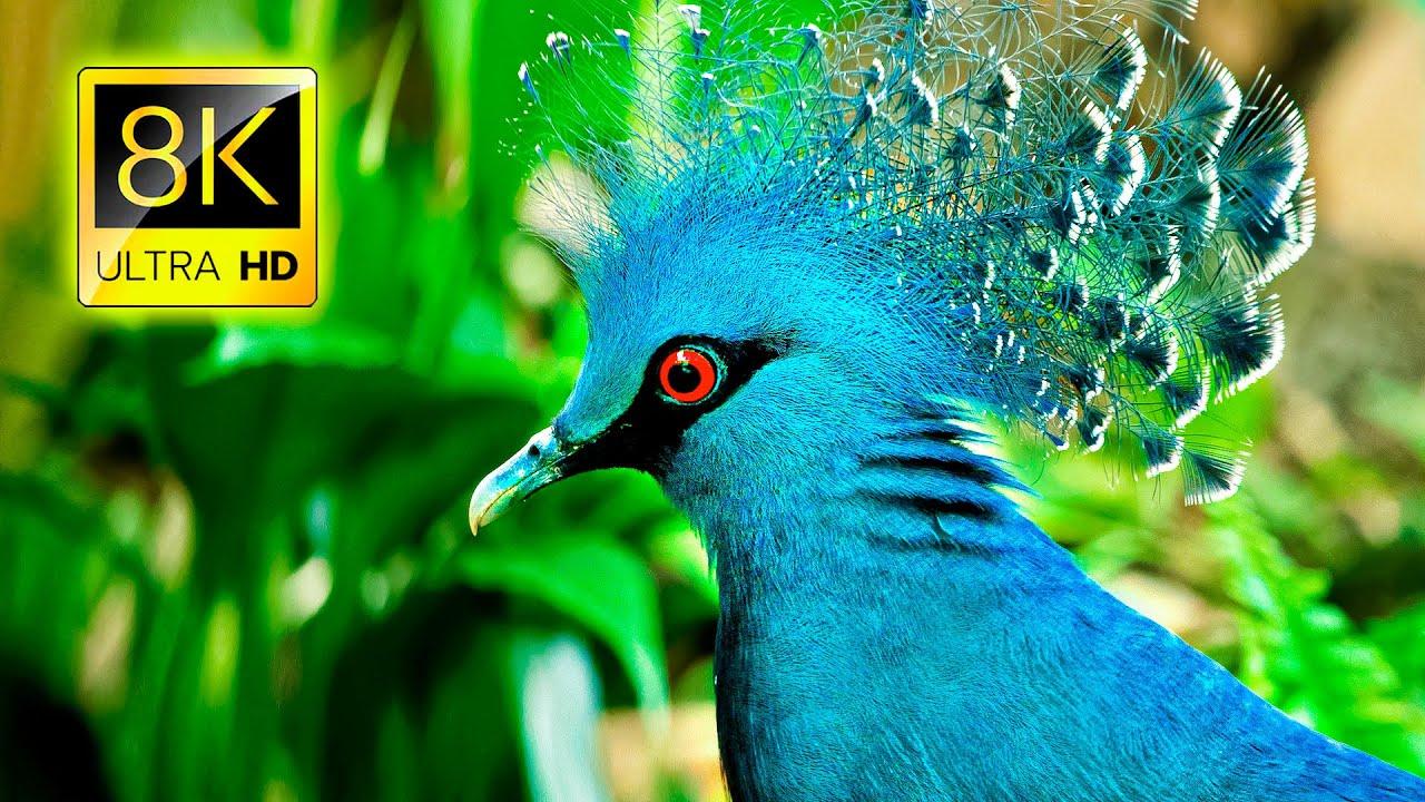 اجمل الطيور على وجه الارض 2021