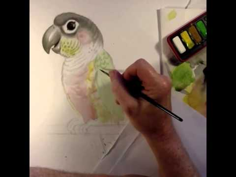 Drawing Pablo the parrot
