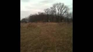 Beagle Pack Jumping Rabbit
