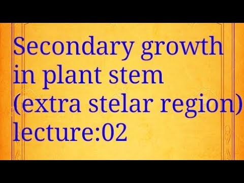Lecture 02 - SECONDARY GROWTH in Plant Stem (Extra Stelar Region) | SNOBER's Biology