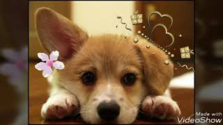 Переделанные картинки собачек! Милые картинки собачек!🐩🐶