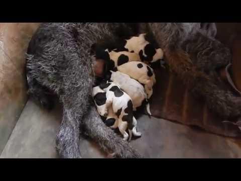 Кожные болезни собак Ветеринария и уход за собаками