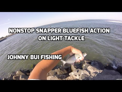 Nonstop Snapper Bluefish Action On Light Tackle, NJ 9/14/16