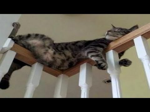 Funny Cats Sleeping in Weird Positions Compilation | Cats Sleep In Weird Places