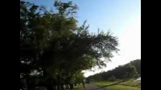 № 169 США Сын Флорида Велосипед Река и Аллигаторы 2010