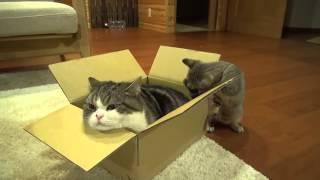 Maru the cat - 2013/12  - 04 - Many boxes and Maru & Hana