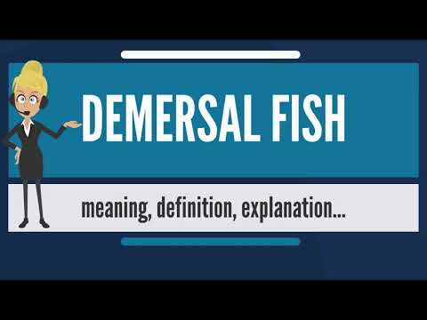 What Is DEMERSAL FISH? What Does DEMERSAL FISH Mean? DEMERSAL FISH Meaning & Explanation