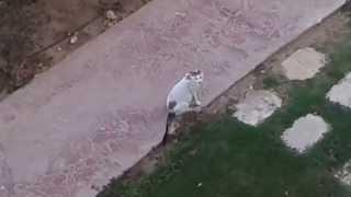 Кот в Египте