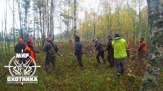 Охота #199 открытие загонной на лося