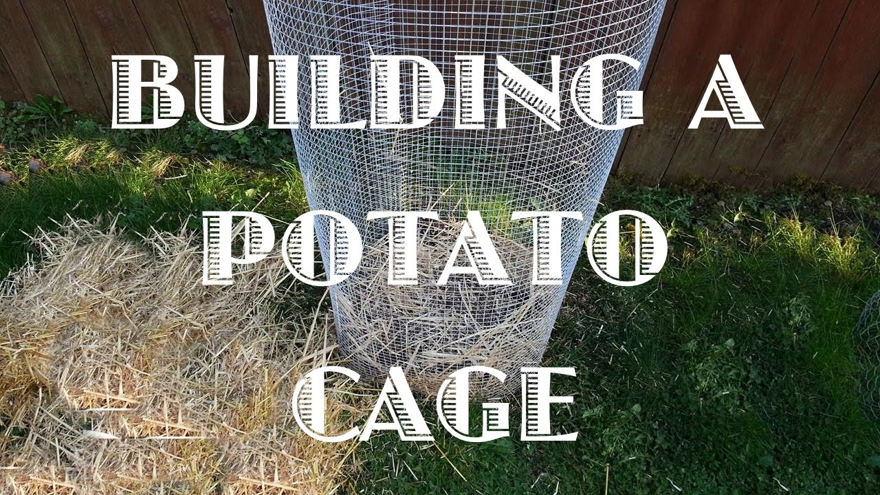 Building A Potato Cage Youtube