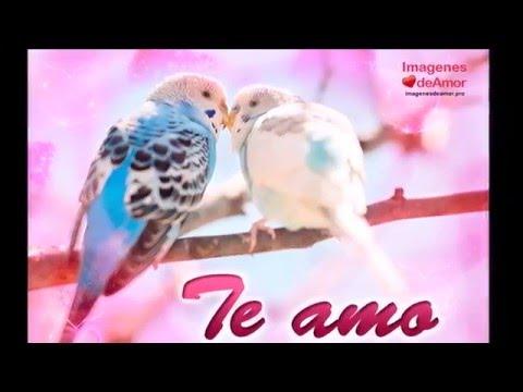 Aves Enamoradas 6 Imágenes De Amor Con La Frase Te Amo