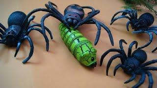 видео Дети-пауки. Скалодромы для детей