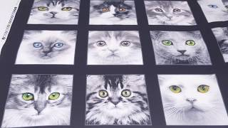 black cute grey white cat Adorable Pets fabric by Elizabeth's Studio
