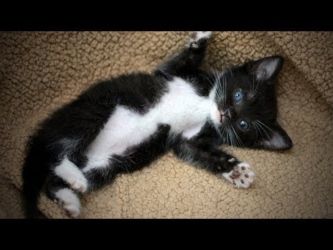 Funny Cats 🐱😂 Playful and Cute Cats (Part 1) [Funny Pets]